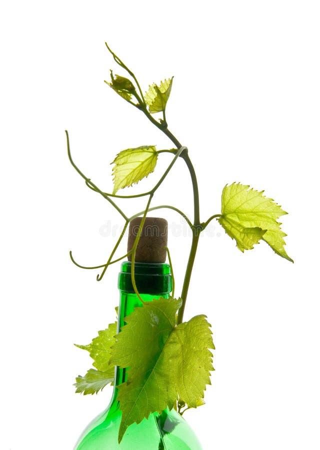 Бутылка вина и листьев стоковые фотографии rf
