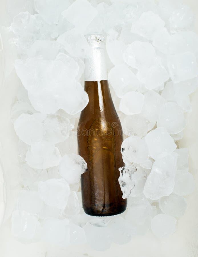 Бутылка кубов пива и льда стоковые фотографии rf