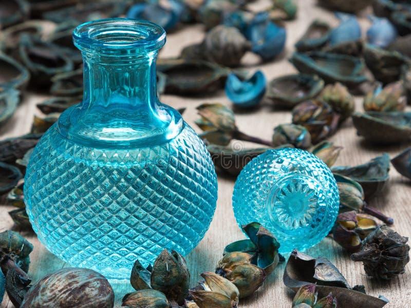 Бутылка синего стекла окруженная высушенными заводами стоковое фото