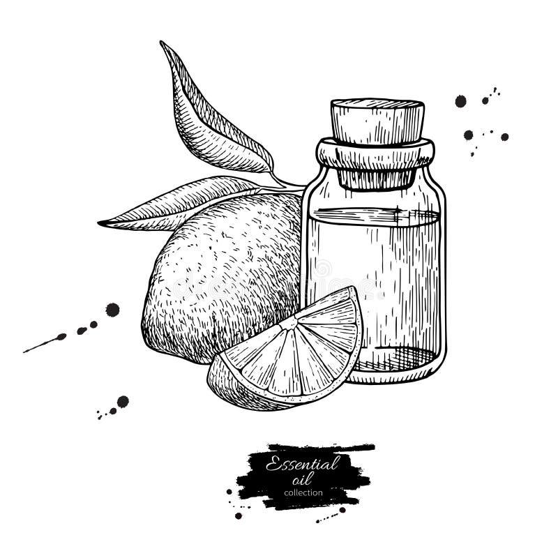 Бутылка эфирного масла лимона и плодоовощ лимона вручают вычерченную иллюстрацию вектора Изолированный чертеж для обработки арома бесплатная иллюстрация