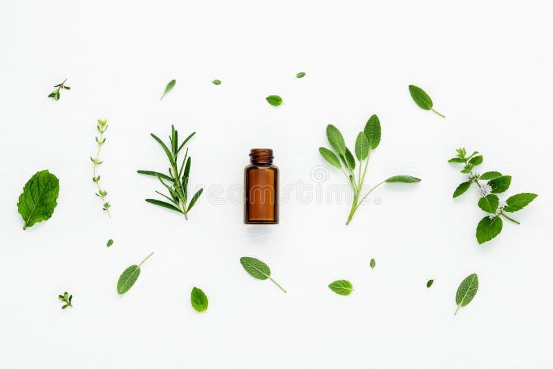 Бутылка эфирного масла с свежим травяным шалфеем, розмариновым маслом, лимоном стоковая фотография rf