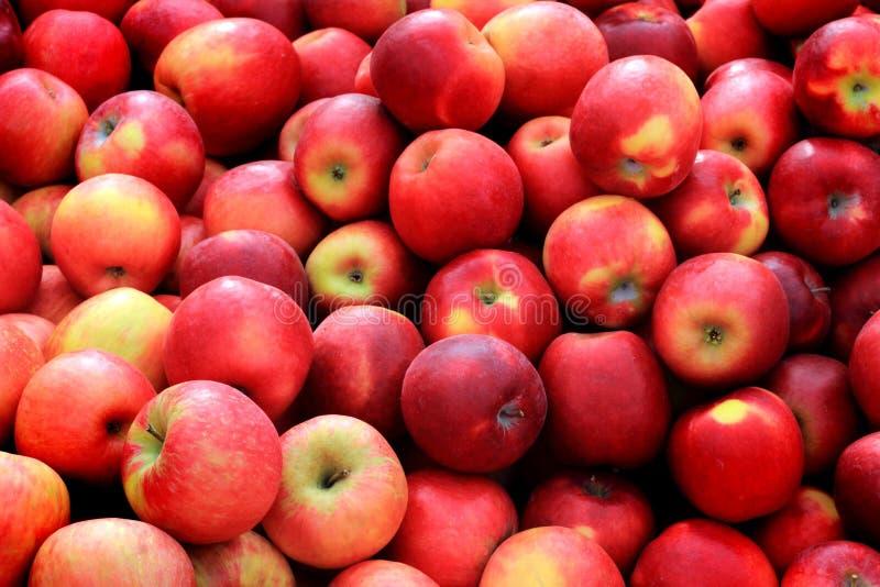 Бушель красных яблок стоковые изображения rf