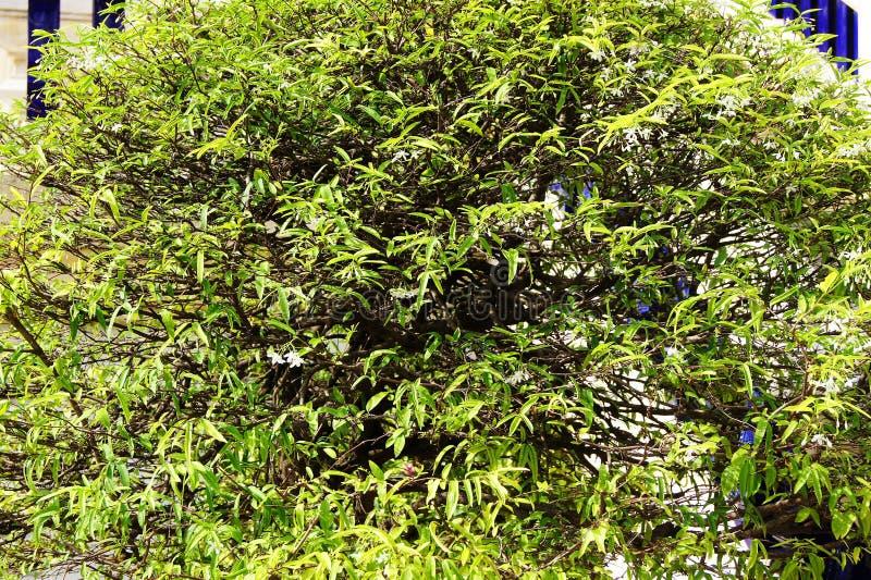 Буш белый фон стены стоковые фотографии rf