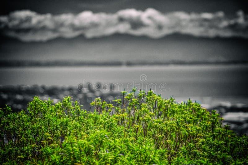 Буш, Нельсон Новая Зеландия стоковое изображение rf