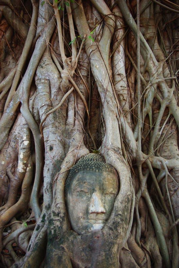 Будда в дереве стоковая фотография