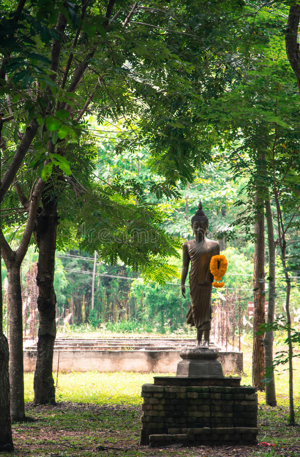 Будда в древесинах стоковая фотография rf