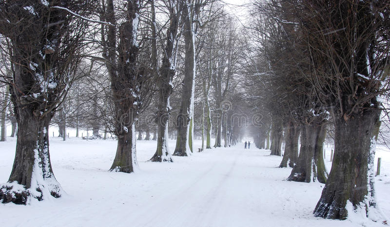Бульвар деревьев в снеге стоковые изображения
