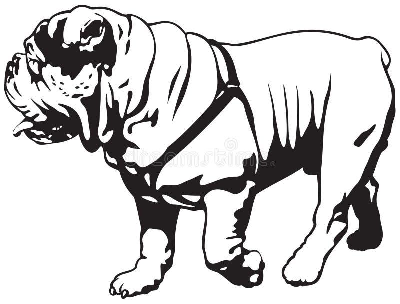 Бульдог, английский бульдог или великобританский бульдог иллюстрация вектора