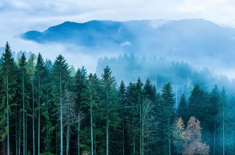 Будящ ïn леса известняк Альпы стоковые изображения rf