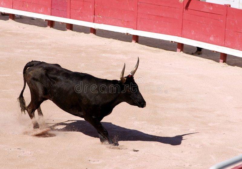 бык арены злющий стоковая фотография rf