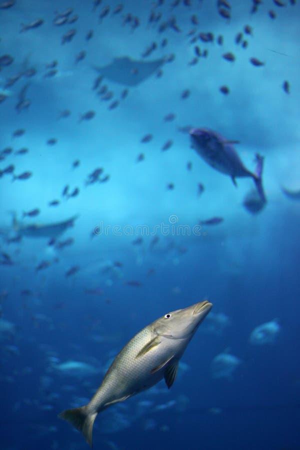 был съеденными рыбами исчезая малое тропическое стоковое фото