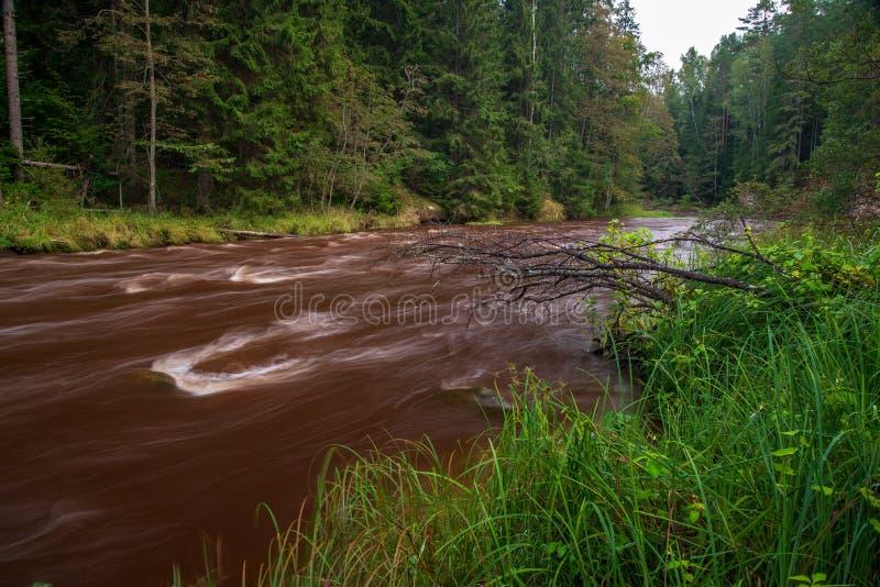 быстрое река в лесе стоковые фото