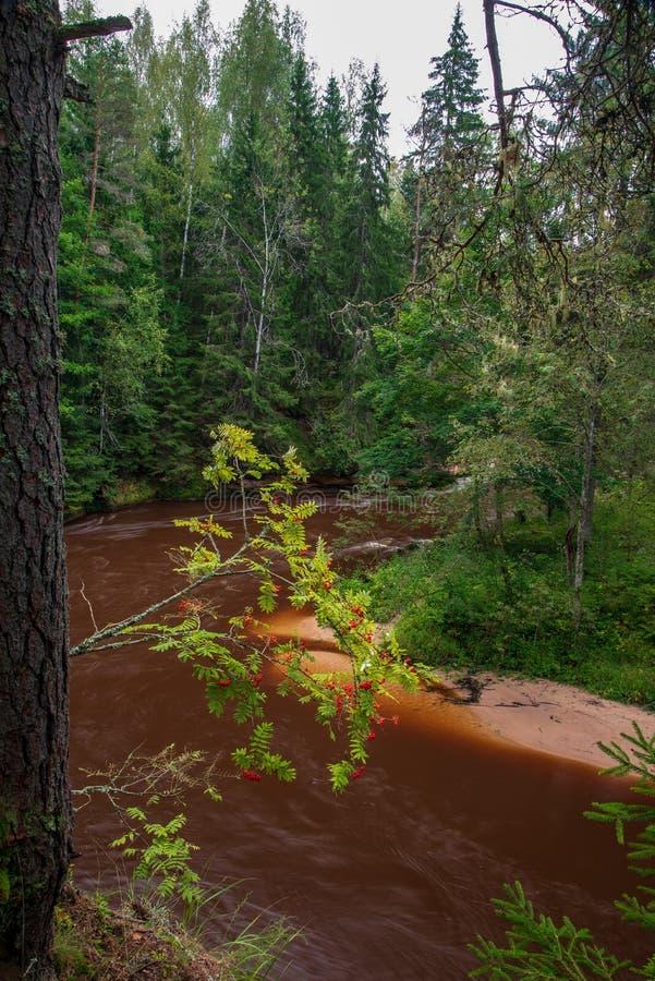 быстрое река в лесе стоковая фотография