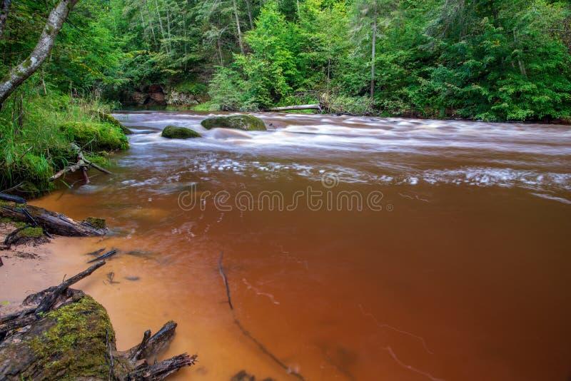 быстрое река в лесе стоковое изображение