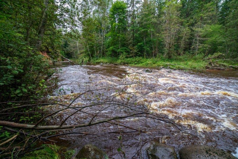 быстрое река в лесе стоковое фото