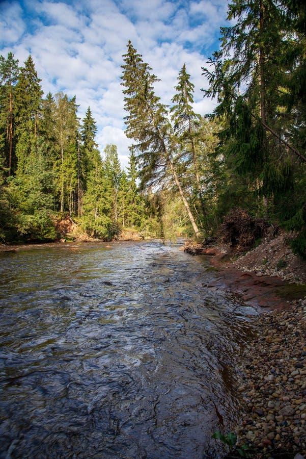 быстрое река в лесе стоковые изображения rf