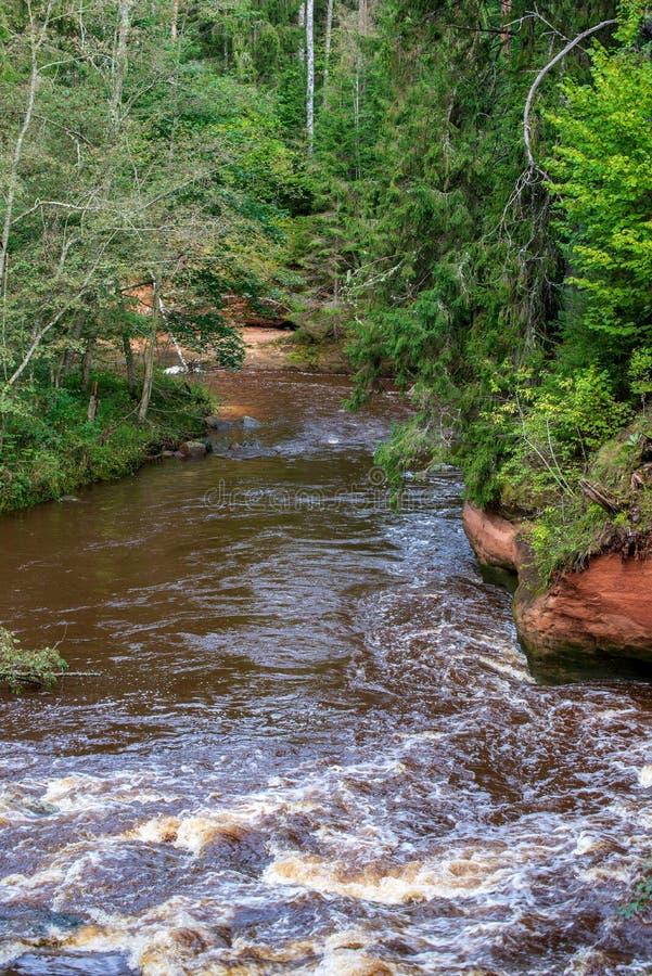быстрое река в лесе стоковое фото rf