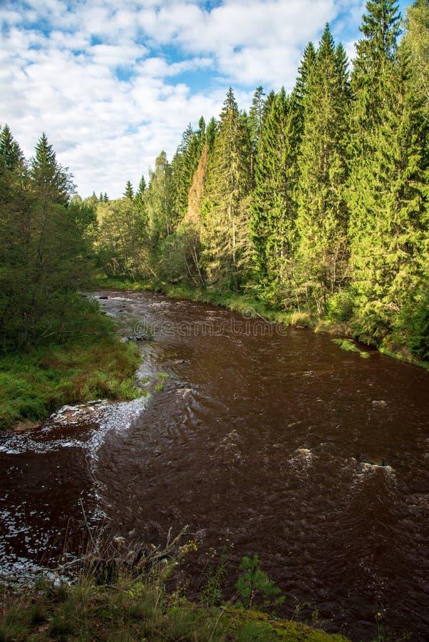 быстрое река в лесе стоковые изображения