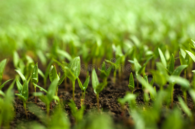 быть фермером органический стоковые фото