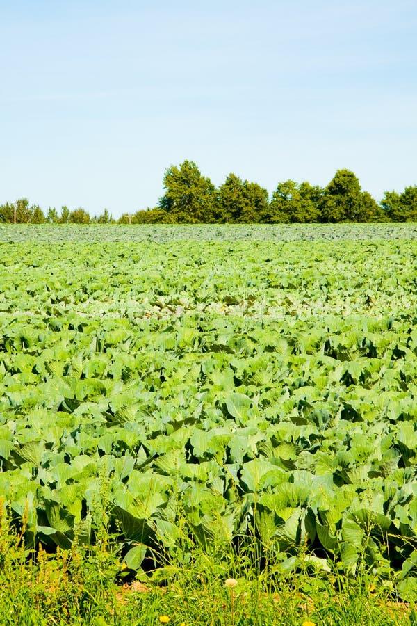 быть фермером салат стоковые изображения