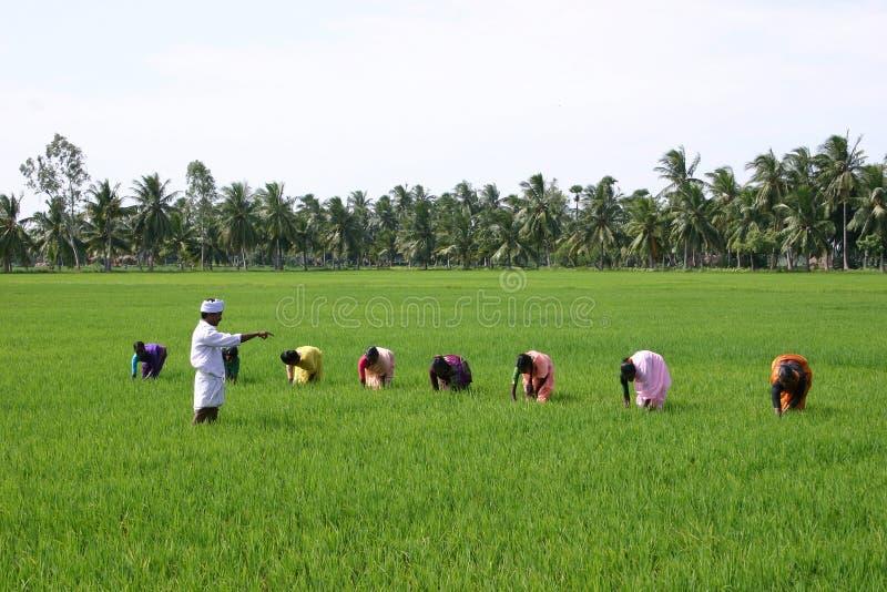 быть фермером стоковая фотография rf
