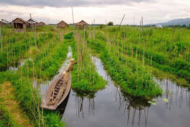 Благоустраивайте взгляд плавая садов на озере Inle с фермером стоковые изображения rf