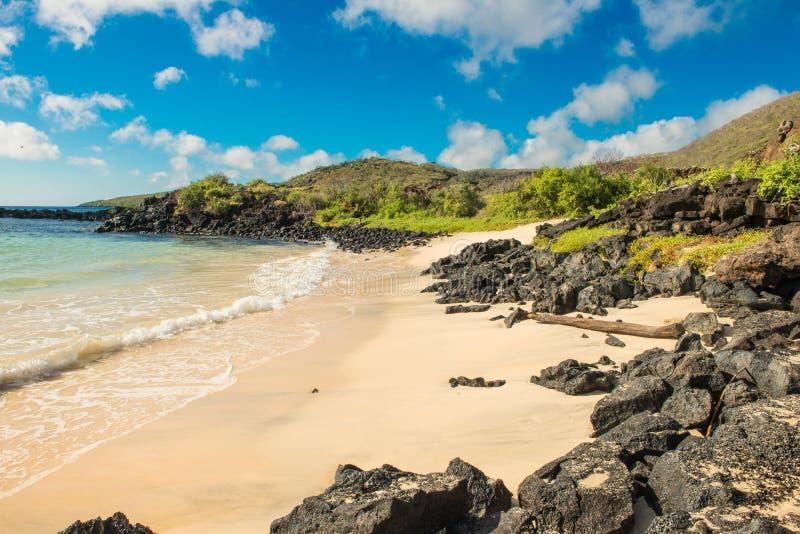 Благоустраивайте взгляд пляжа на баклане Punta, Галапагос стоковая фотография rf