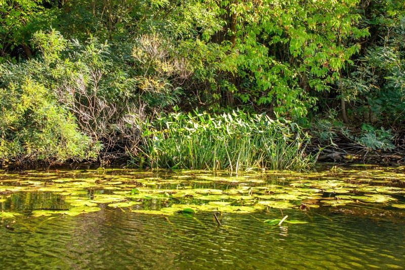 Благоустраивайте изображение деревьев малого реки reedy и старых стоковое фото