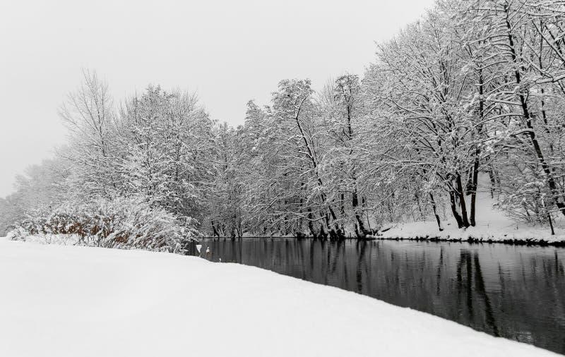 Благоустраивайте сцен-реку снега и деревья Нюрнберг, реку Pegnitz Германии стоковое изображение