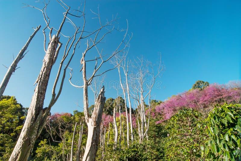 Благоустраивайте точку зрения suthep Doi - холма pui Doi в Chiangmai, стоковое фото