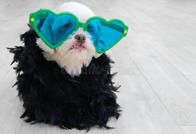 Блестящая собака нося одежду моды стоковая фотография