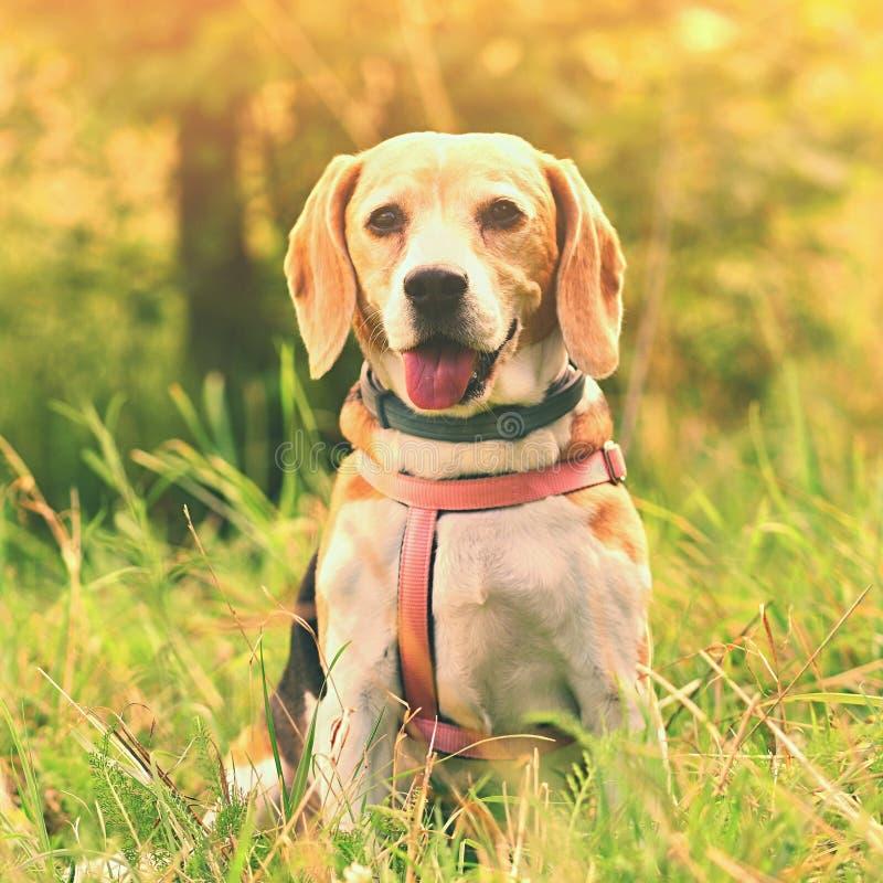 блестящий Красивая съемка собаки в траве стоковые изображения