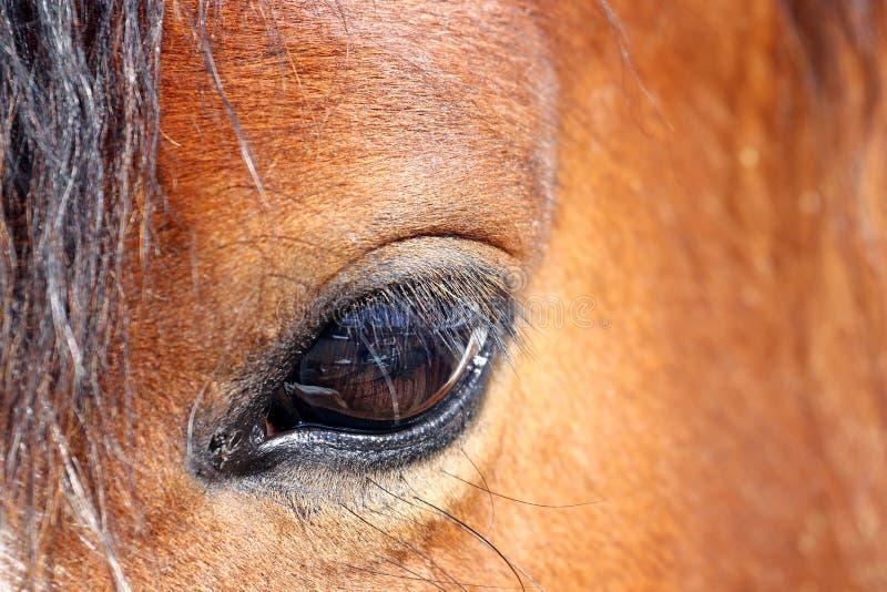 близкая лошадь глаза вверх стоковое изображение rf