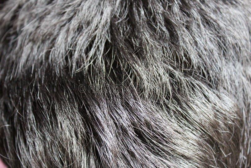 близкая текстура съемки волос вверх стоковое изображение rf