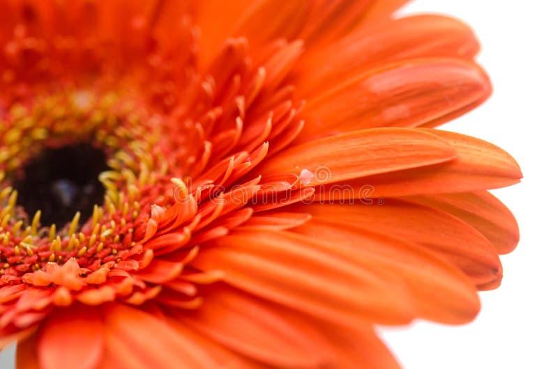 близкий цветок вверх стоковые изображения