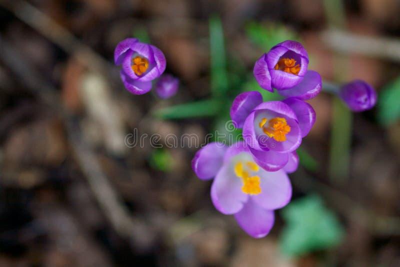 близкий цветок вверх стоковые фотографии rf