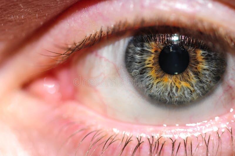 Download близкий человек глаза вверх Стоковое Фото - изображение насчитывающей макрос, bluets: 81809272