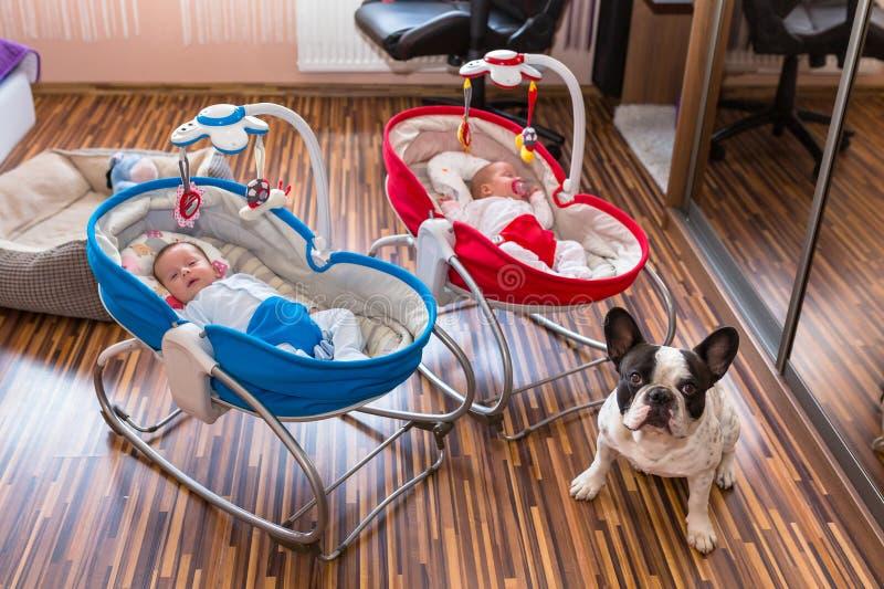 Близнецы собаки наблюдая в вашгердах стоковые фото