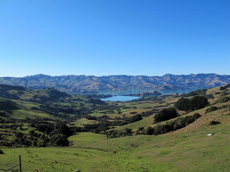 Бдительность Akaroa в южной Новой Зеландии стоковое фото rf