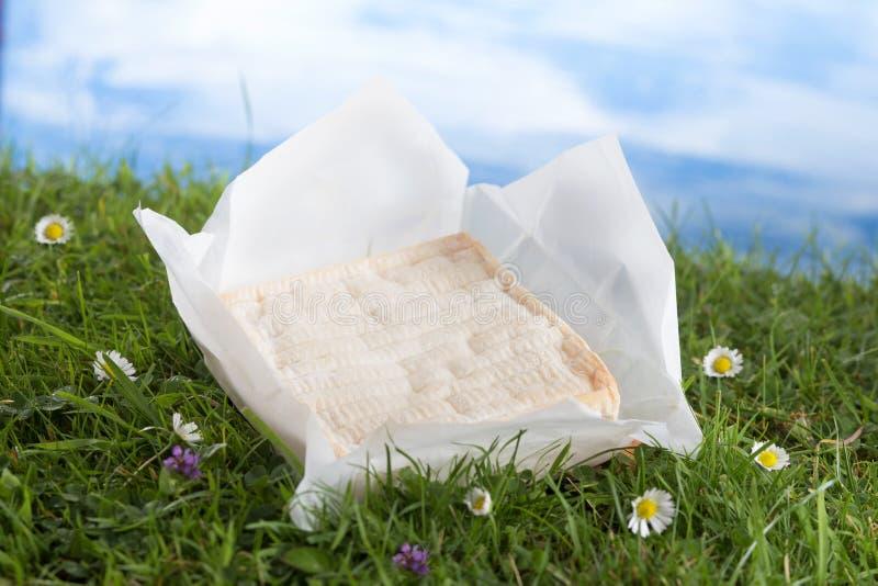 Блок сыра француза Pont-l'evique стоковая фотография