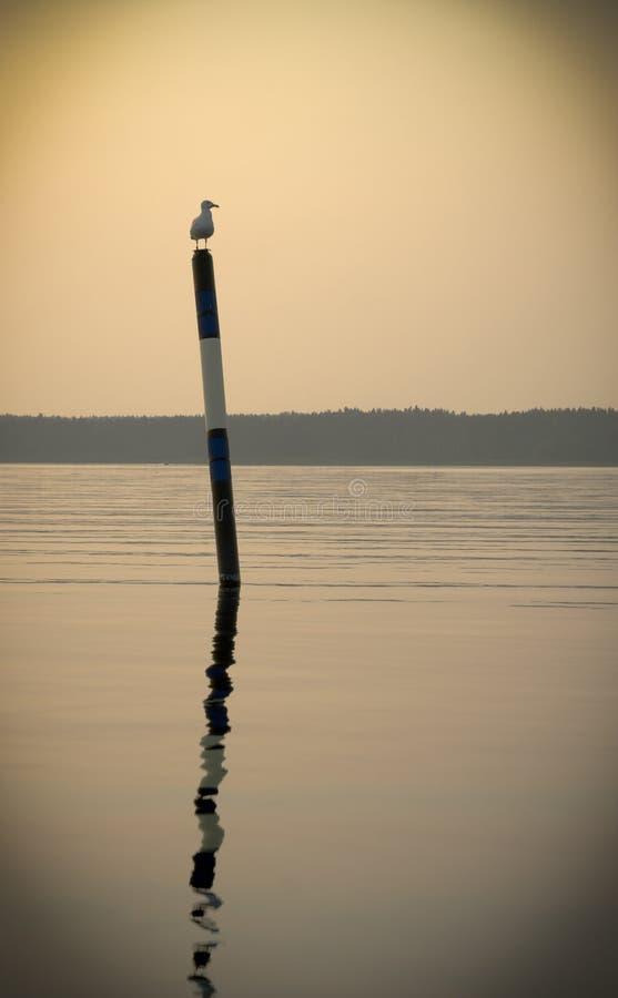 Важная чайка сидя на томбуе моря в свете захода солнца солнца стоковые фотографии rf