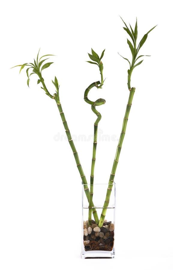 ваза бамбуков 3 стоковые фотографии rf