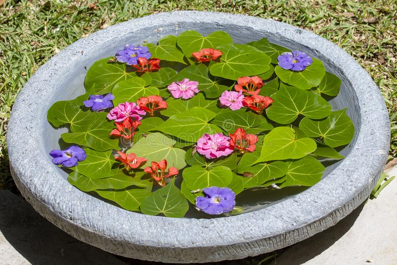 Ваза заполнена с водой и украшена с зелеными листьями и красивыми цветками в тропическом саде Остров Маврикий стоковые изображения