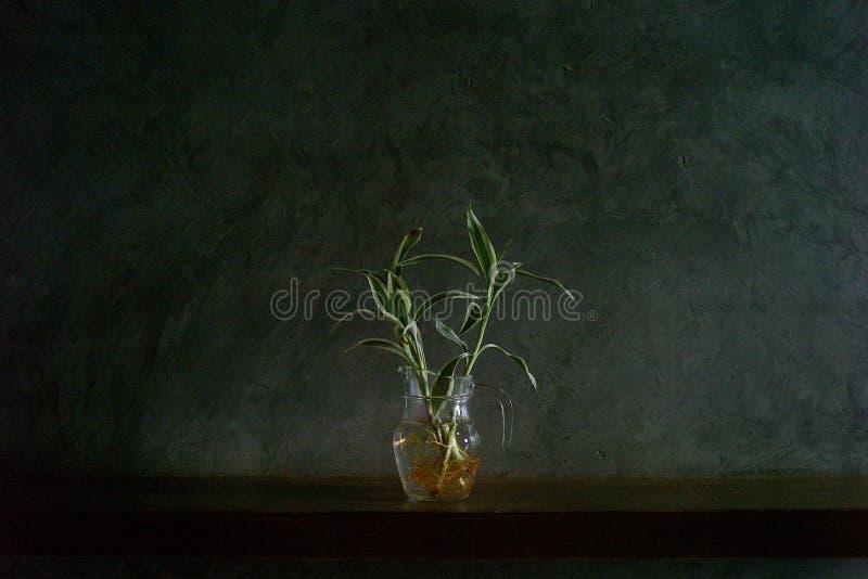 ваза опарника стоковое фото