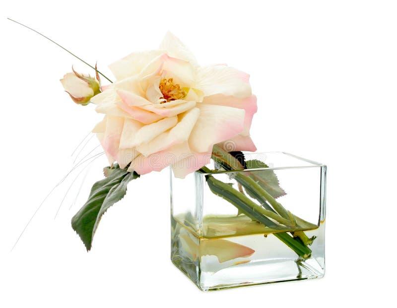 ваза сада розовая стоковое фото rf