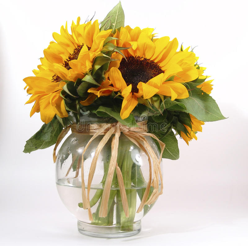 ваза солнцецвета стоковая фотография rf