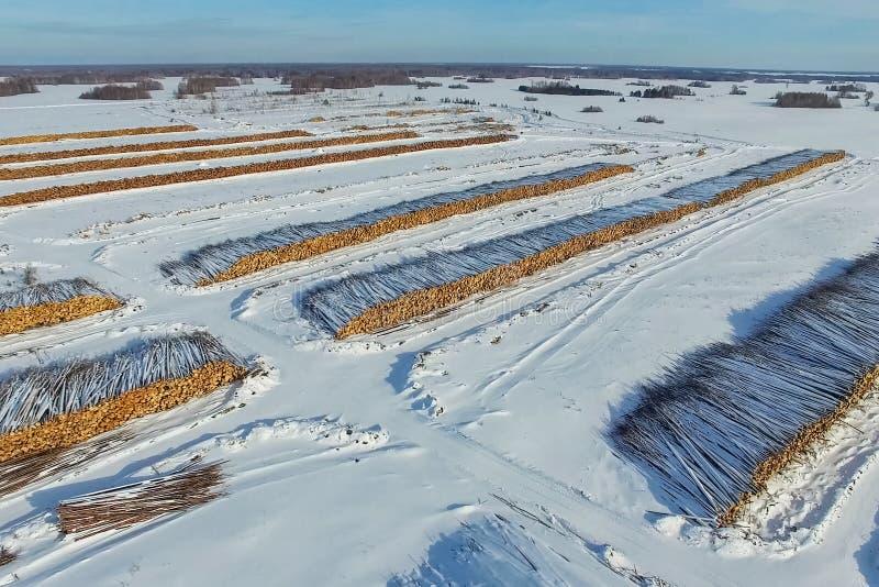 Валить деревья лежат под открытым небом Обезлесение в России Разрушение лесов в Сибире Сбор древесины стоковые изображения rf