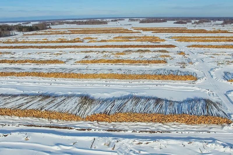 Валить деревья лежат под открытым небом Обезлесение в России Разрушение лесов в Сибире Сбор древесины стоковые фото