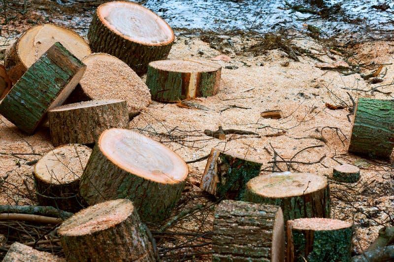 Валить деревья, обезлесение, пни валить деревьев, валили ствол дерева стоковая фотография