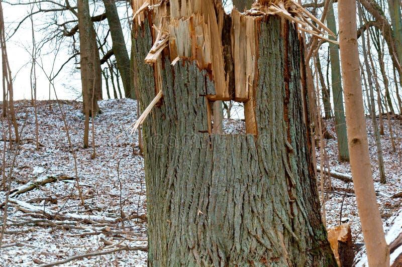 Валить деревья, обезлесение, пни валить деревьев, валили ствол дерева стоковая фотография rf